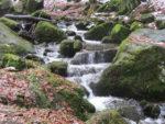 Wanderung – Silberbachtal